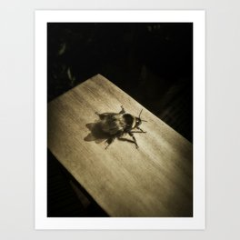 Bombus hortorum (The garden bumblebee) Art Print