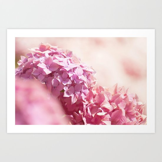 Dreamy pink hydrangea - Flower - Floral Art Print