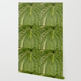 Dewy Leaf Wallpaper