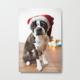 Christmas Boston Terrier Metal Print