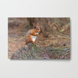 woodland cuties Metal Print