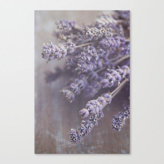 lavande Canvas Print