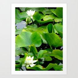 Waterlily #2 Art Print