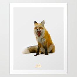 Yawning Fox Art Print