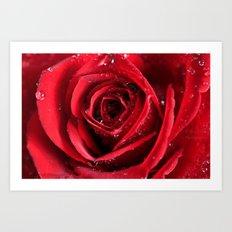A special Rose  Art Print