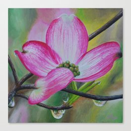 Pink Dogwood Blossom Canvas Print