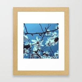White Magnolia Bloom Blue Sky Framed Art Print