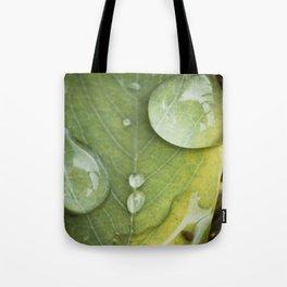 Raindrops on a green leaf Tote Bag