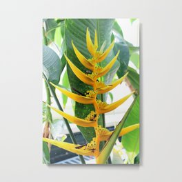 Yellow Heliconia Flower Metal Print