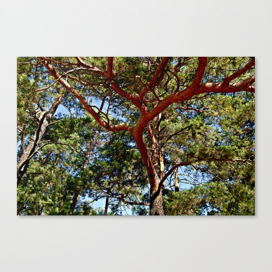 Autumnal lure of the forest Canvas Print