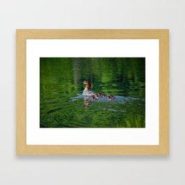 Merganser Duck Family Framed Art Print