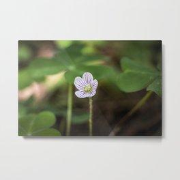 Wood Sorrel Flower Metal Print