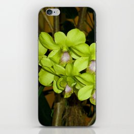 Orchid Study 22 iPhone Skin