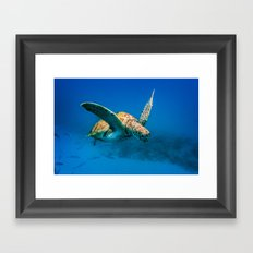 Bajan Turtle 2 Framed Art Print