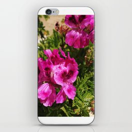 desert flower pink iPhone Skin