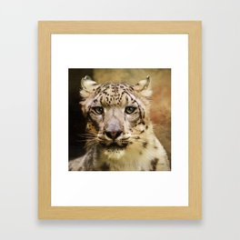 Hope For Tomorrow - Snow Leopard Art Framed Art Print