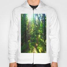 Sunshine Forest Hoody