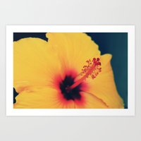 hibiscus Art Prints featuring Hibiscus by MSG Imaging