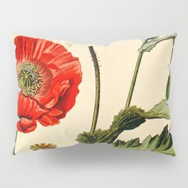 Poppy picture from 1900 Pillow Sham
