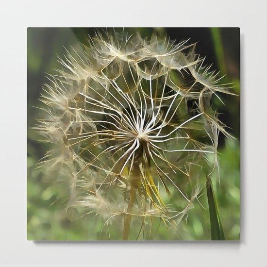 Tragopogon Wildflower Salsify Metal Print