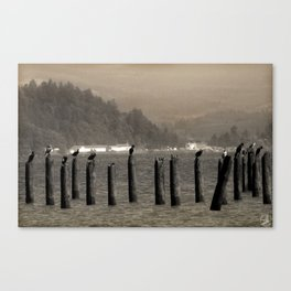 Columbia River Cormorants Birds Canvas Print